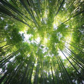 Shinrin yoku – La méditation de pleine conscience en forêt